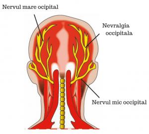 nervii occipitali