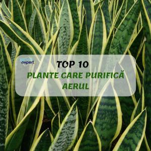 Top 10 PLANTE CARE PURIFICĂ AERUL DIN CASĂ