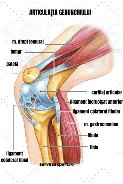 Cele mai frecvente 10 cauze ale durerilor de genunchi - Move&Flex: Ce se întâmplă Doctore?