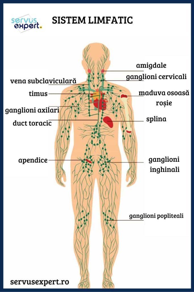 ganglioni la gat simptome