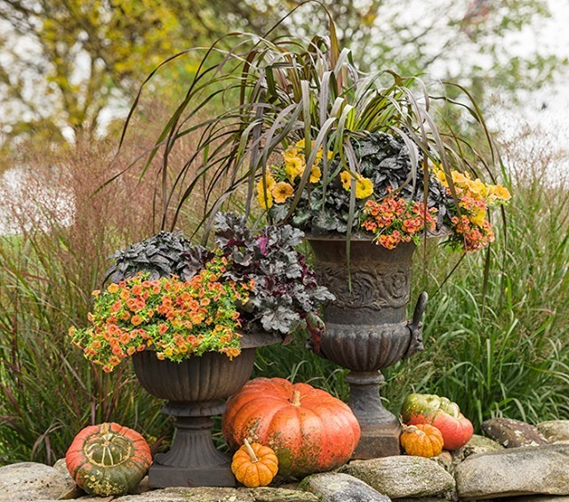 Gradina si terasa: plante la ghiveci
