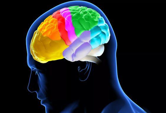 rolul creierului în viziune supliment alimentar pentru vedere