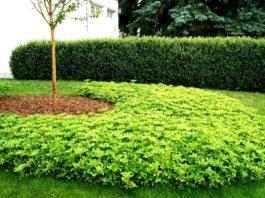5 plante de umbra