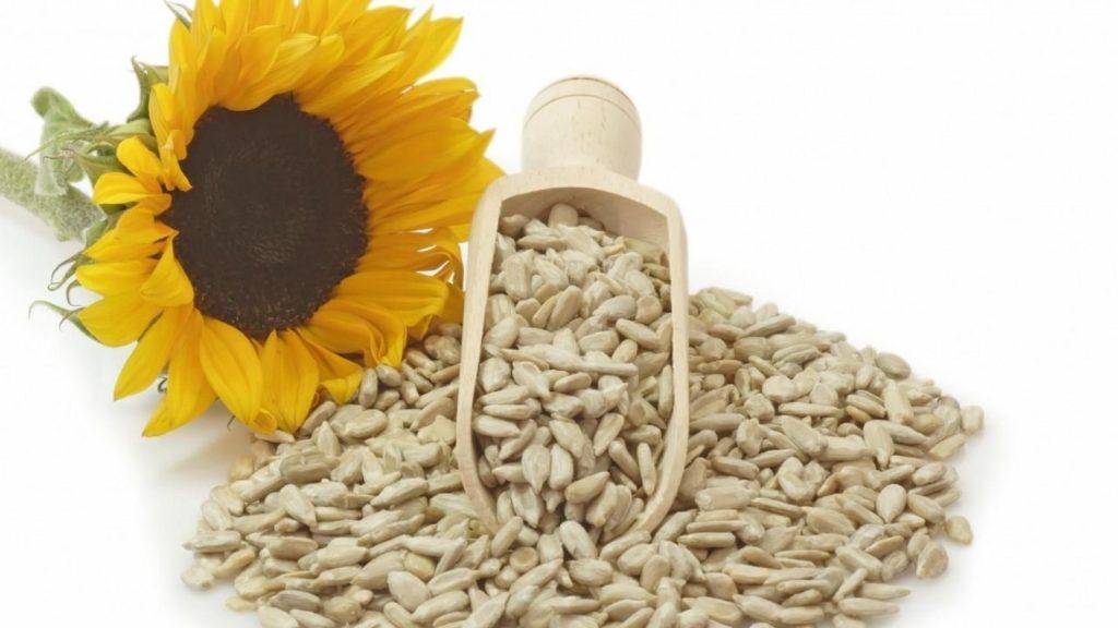 10 alimente bogate in proteine floarea soarelui